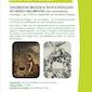 Stadsbezoek Brugge en tentoonstelling 'De Heksen van Breugel'