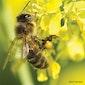 Imker in actie: honing slingeren & bijenhotel bouwen