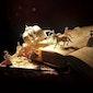Kip van Troje presenteert: Straattheater in Borsbeek