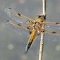 Openschuurdag - Vlinders en Libellen (met picknickmogelijkheid)