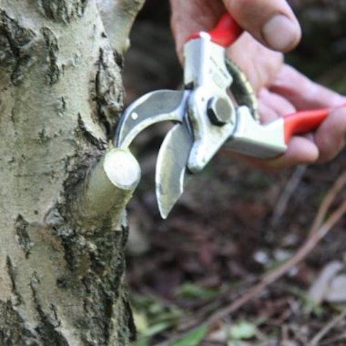 Snoeien van bomen en struiken       V O L Z E T