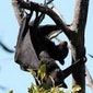 Vleermuizen, de vleugels van de nacht