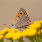 vlinderfietstocht