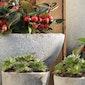 Decoraties in beton voor tuin en interieur met KVLV-Munzwalm
