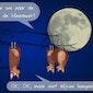 Nacht van de Vleermuis NP Moervaart-Zuidlede