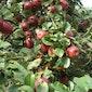 Fruitmobiel perst bij Natuurpunt Vlaamse Ardennen