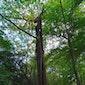 Cursus beheer van veteraanbomen