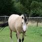 Paard- en pony beleefdag voor kleuters