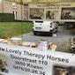Knuffel eens een miniatuurpaardje - Opendeurdag Lovely Therapy Horses vzw