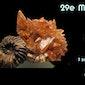 29e Internationale Mineralen- en Fossielenbeurs Lithos Harelbeke