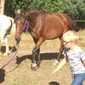 Paardenatelier voor kids