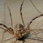 Kennismaking met spinnen