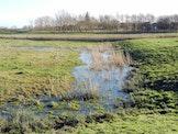 Werknamiddag Uitkerkse polder