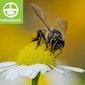 Oog in oog met wilde bijen – workshop bijenhotels bouwen