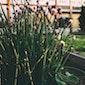 Over basilicum, peterselie, kervel en bieslook