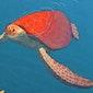 Filmtip: La tortue Rouge