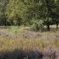 Heidewandeling met heideborrel