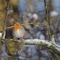 Winterwandeling in Bergerven