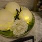 Bollen of muis met licht Femma afdeling Neerwinden