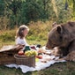 Vegetarische picknicks en buffetten