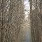 Winterwandeling in Kloosterbos en Dunbergbroek