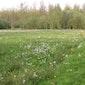 Lentewandeling in Kloosterbos en Dunbergbroek