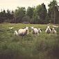 Op bezoek bij de schaapherder - Volzet