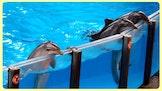 Activak jeugdkampen - Dolfijnenkamp Zomer 2017