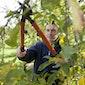 Theorie  voorjaarssnoei fruitbomen