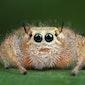 Café Winterwoud : Kennismaking met spinnen