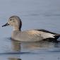 Watervogelwandeling
