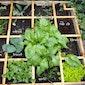 De plaats en het nut van kruiden in de groententuin.