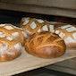 Van bio-graan tot bio-brood