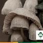 Op stap in Bosland: Wondere paddestoelenwereld