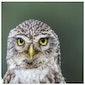 Jaarvergadering en infoavond LIFE Delta Vogelwerkgroep Oost-Brabant
