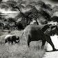 Safarikamp