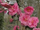 Het Leen...Natuurlijk! - Troevenwandeling 'Camellia'