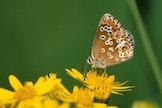 Het Leen...Natuurlijk! - Bloemen, bijen en andere insecten