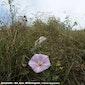 Natuurexploratie Geleide natuurwandeling in het duingebied 'Directeur Generaal Willemspark'