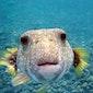 A-teens: Onderwaterwonderwereld