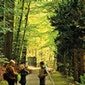 gratis wandeling: Vaucamps' bos, hoe zou het daarmee zijn?