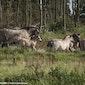 Natuurexploratie Geleide natuurwandeling in het Vlaams natuurreservaat 'de Zwinduinen'