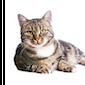 Het 'mysterie' kat ontrafeld (volzet)