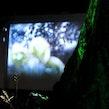 Terra Nova 2017 - Droomfilm - Life Of Pi - Arboretum Kalmthout