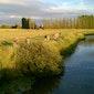 Zomertoeren tussen bron en monding: IJzer- en Handzamevallei, Merkem