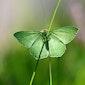 Vlinders in Landschap De Liereman