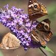 Vlinders en insecten fotograferen - Arboretum Kalmthout