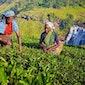 Reis en filmreportage Sri Lanka