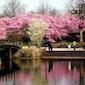 Rondleiding door de Japanse tuin Hasselt