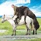 F'L!NK: Of horses and men